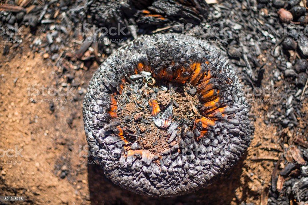 Burnt Forest Landscape stock photo