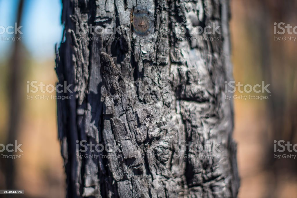 Burnt Forest Landscape royalty-free stock photo