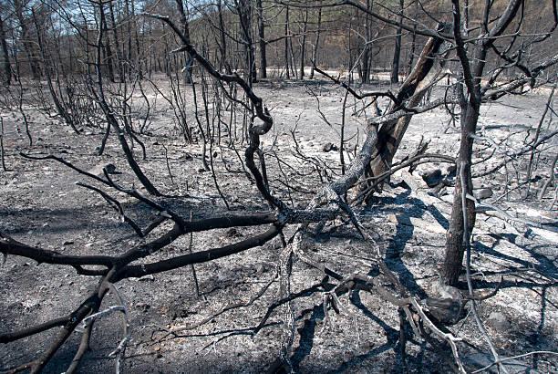 burnt forest - angst vor der geburt stock-fotos und bilder