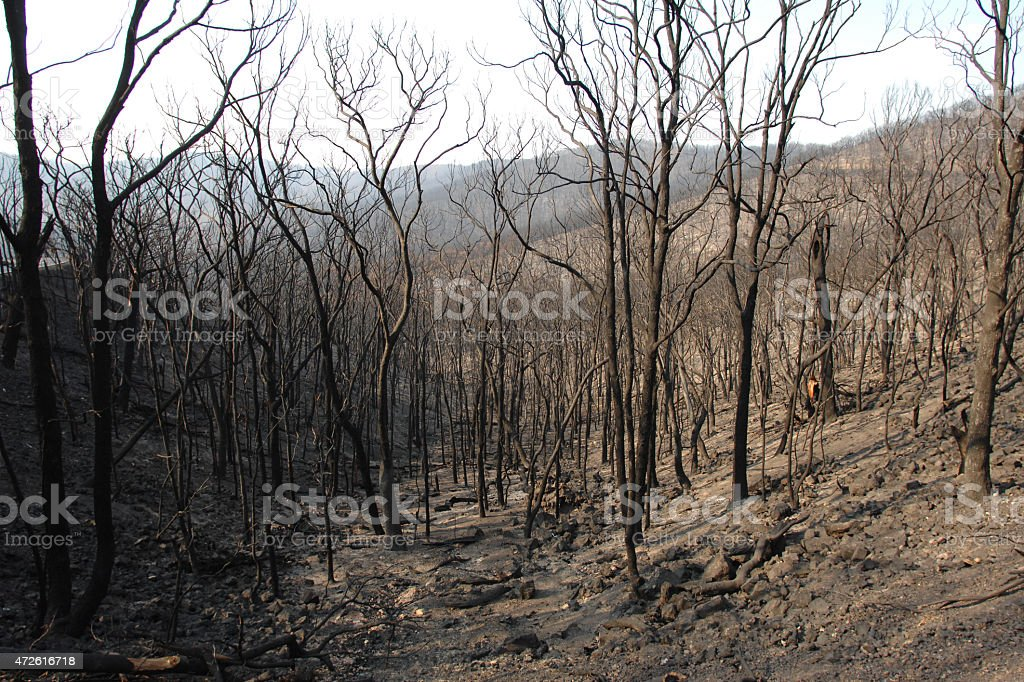 Burnt forest two weeks after the 2009 Black Saturday bushfire stock photo