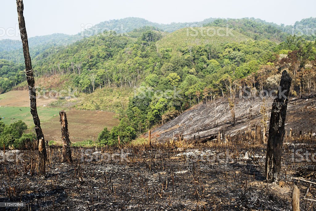 Burnt Hillside Environmental Disaster stock photo