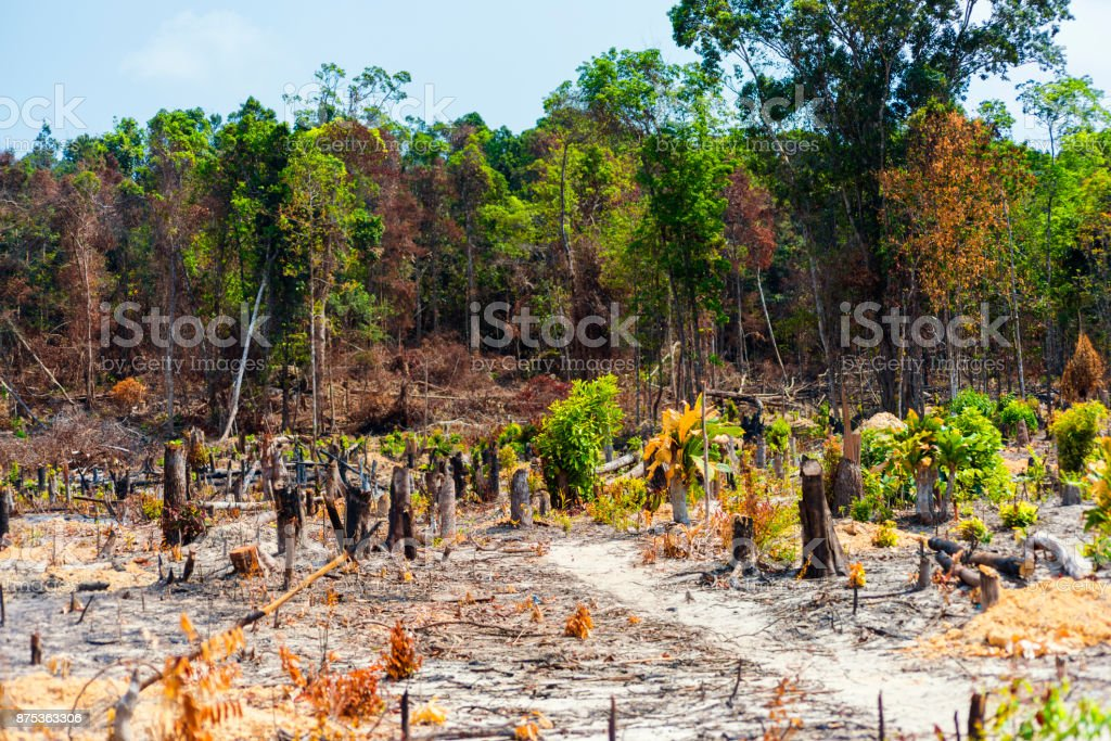 Burnt Rainforest in Cambodia stock photo