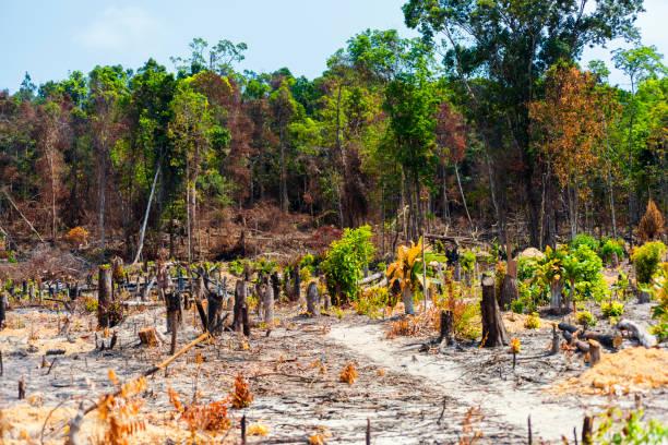 Burnt Rainforest in Cambodia stock photo