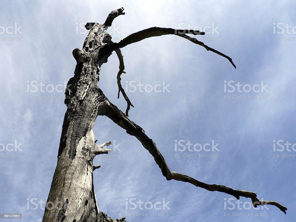 Burnt Tree 01 stock photo