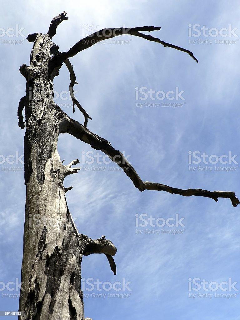 Burnt Tree 02 stock photo