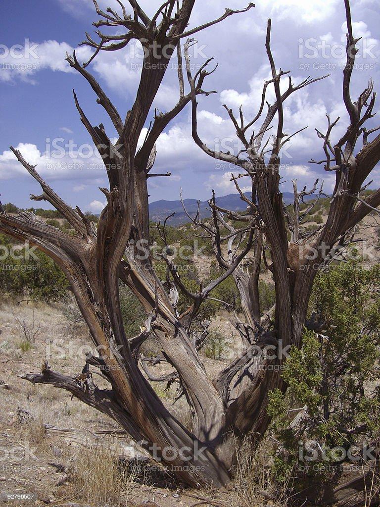 Burnt Tree royalty-free stock photo