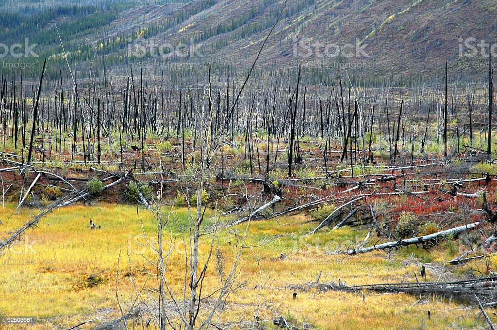 Burnt trees and undergrowth in fall colors. royalty-free stock photo
