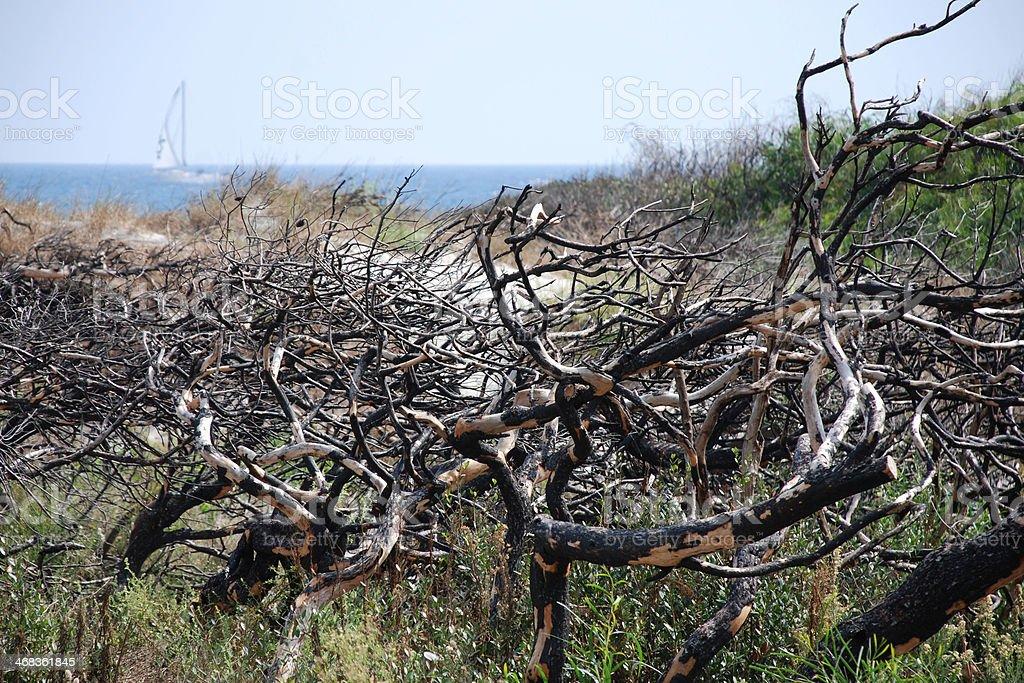 Burnt Trees royalty-free stock photo