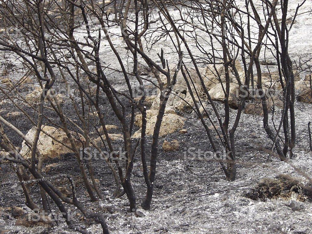 Burnt Bäumen Lizenzfreies stock-foto