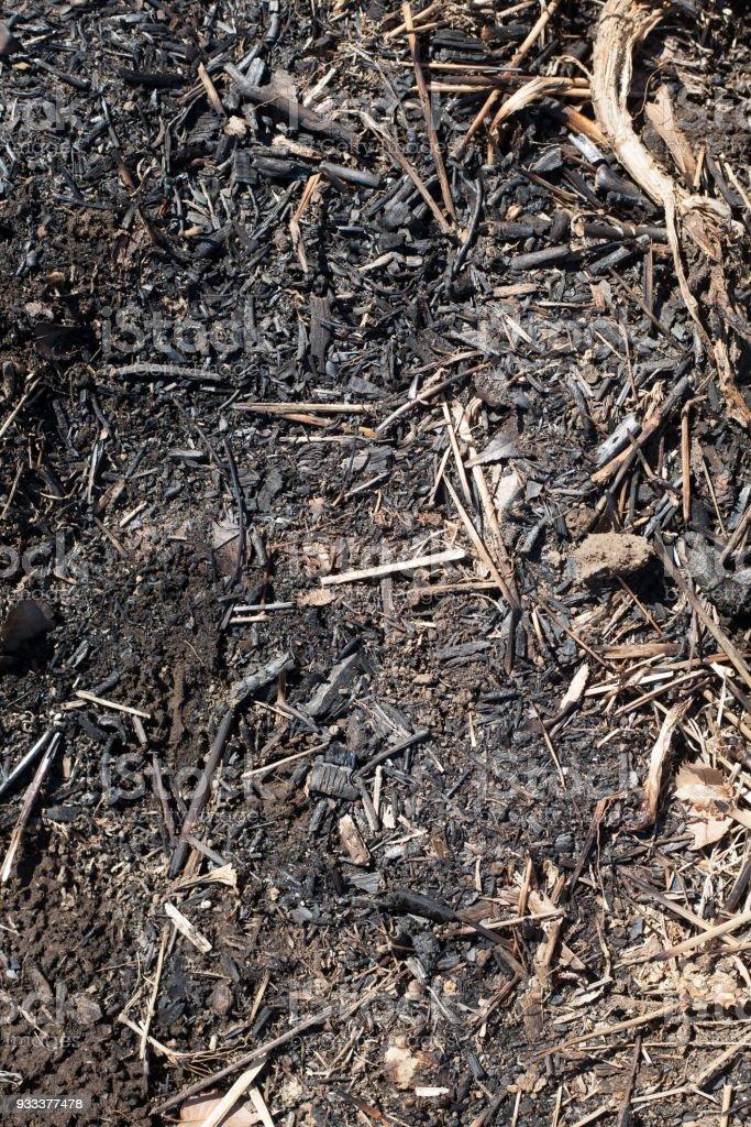 Burnt wood chips for soil stock photo