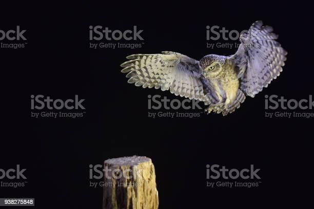 Burrowing owl picture id938275848?b=1&k=6&m=938275848&s=612x612&h=jnxdfrdrmlf b32ysu8s ogbyszfkw91ncynqazyido=