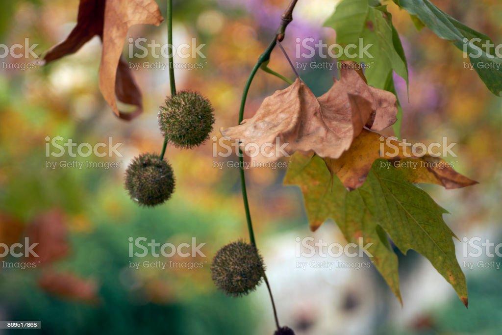 Burrs in Autumn vegetation stock photo