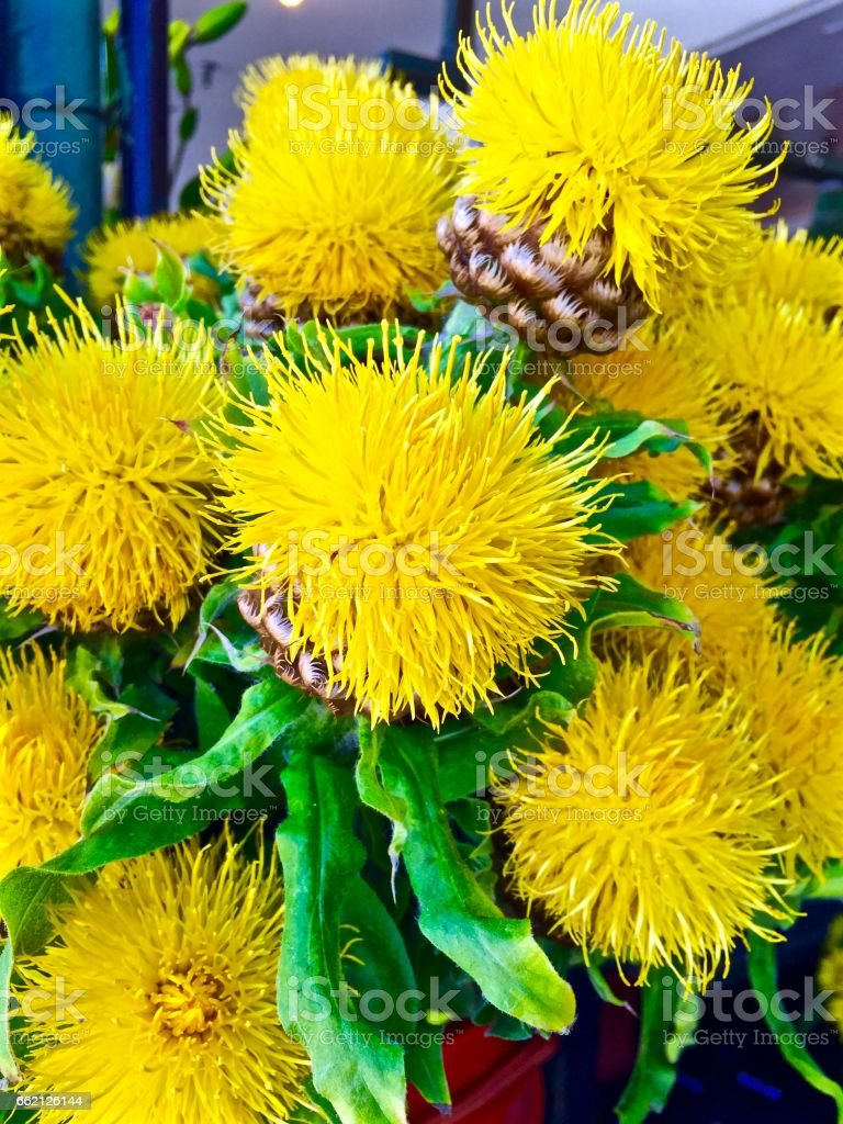 Burst of Yellow royalty-free stock photo