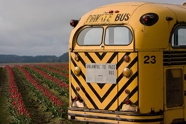 Bus & Tulips Migrant worker bus in the tulip fields migrant worker stock pictures, royalty-free photos & images