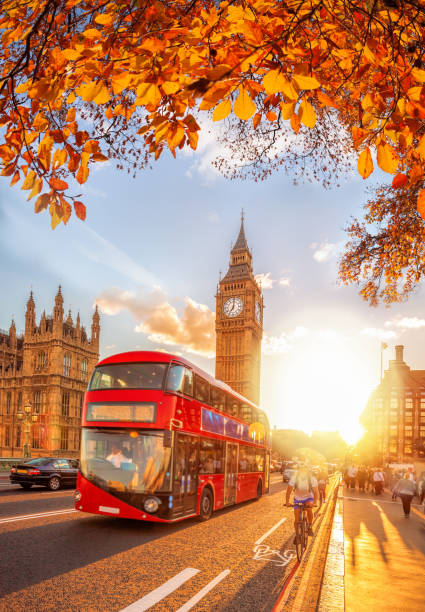 Buses with autumn leaves against Big Ben in London, England, UK stock photo