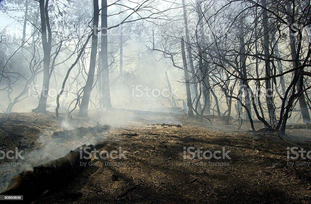 Bush después del fuego - foto de stock