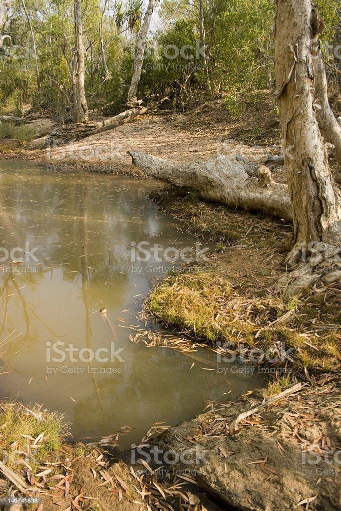Bush creek royalty-free stock photo