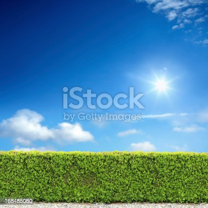 natural bush fence of backyard over sunny sky.