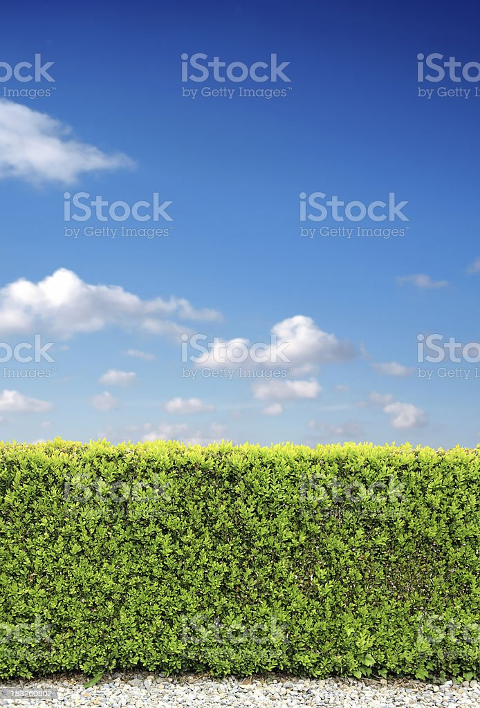 bush fence royalty-free stock photo