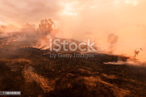 1195174769istockphoto Bush fire, Burned black land on hill in Australia 1198489835