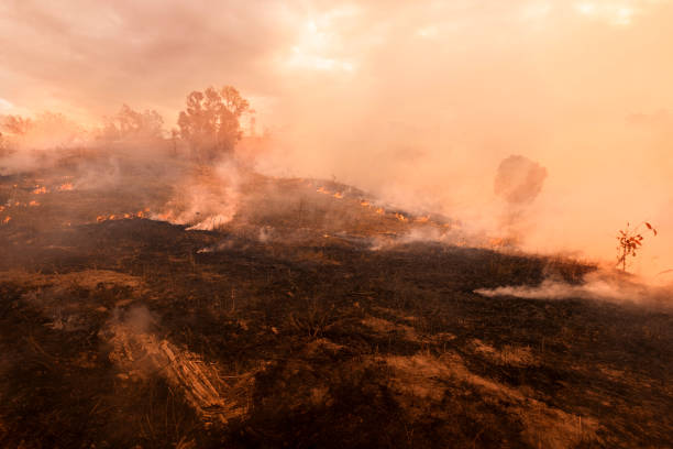 Bush fire, Burned black land on hill in Australia stock photo