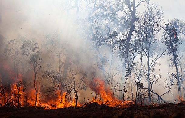 bush fire - bosbrand stockfoto's en -beelden
