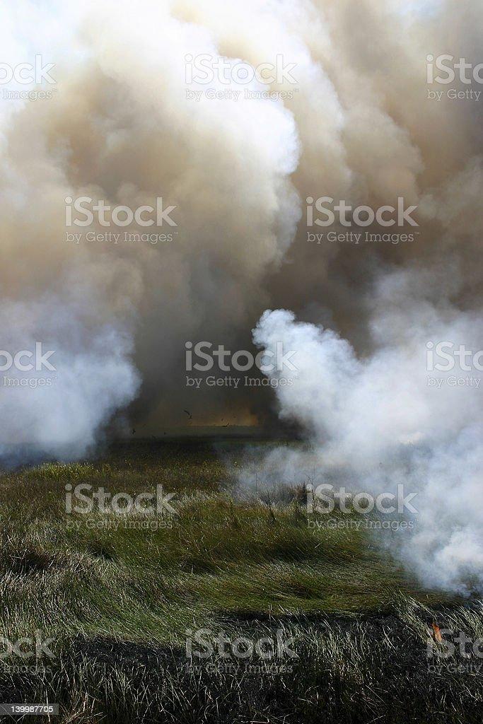 Bush Fire VI royalty-free stock photo