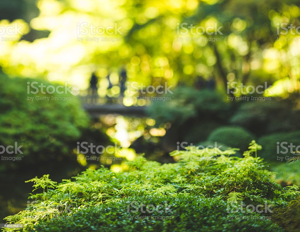 Bush in focus in a green, lush park setting. stock photo