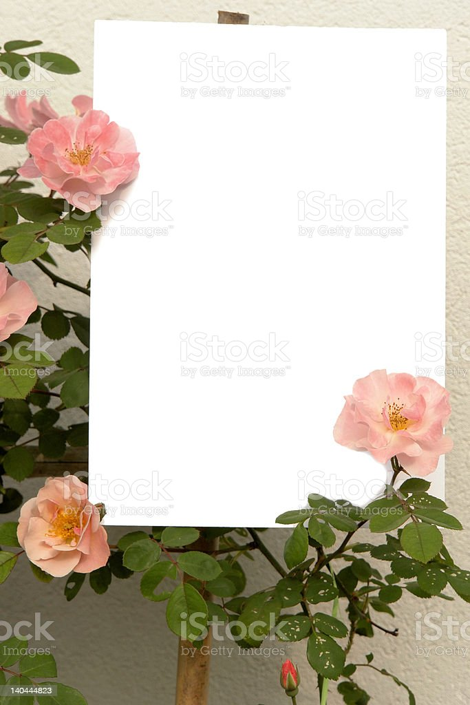 bush of roses and space for text royalty-free stock photo