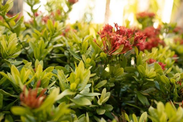 Arbusto - foto de stock