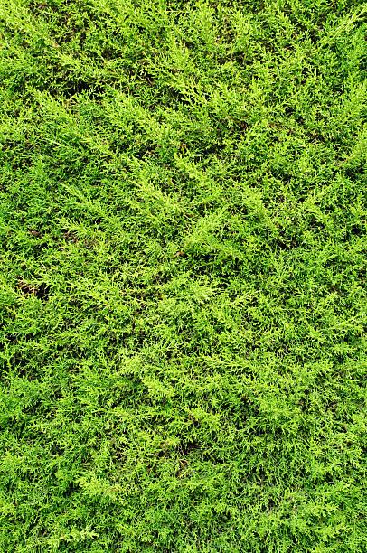 bush stock photo
