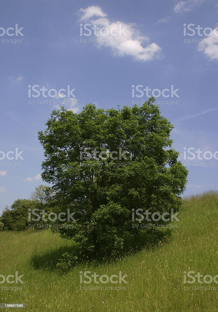Bush royalty-free stock photo
