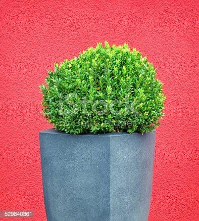 istock bush 529840361