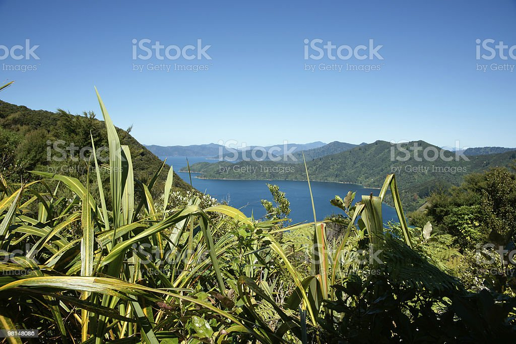 Bush, sea and sky, magnificent New Zealand scenery. royalty-free stock photo