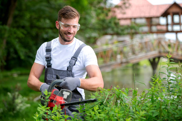 Bush trimming with electrically powered chain saw stock photo