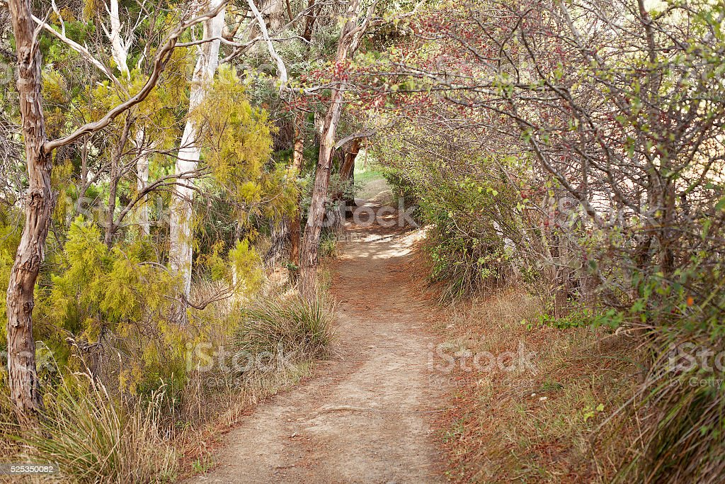 Bush Walking Track stock photo