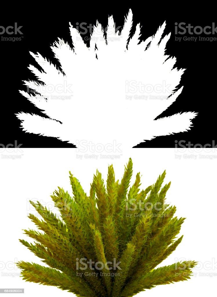 Bush with green leaves Lizenzfreies stock-foto