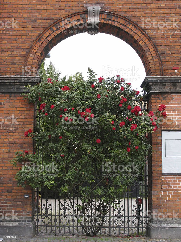 Bush with roses royalty-free stock photo