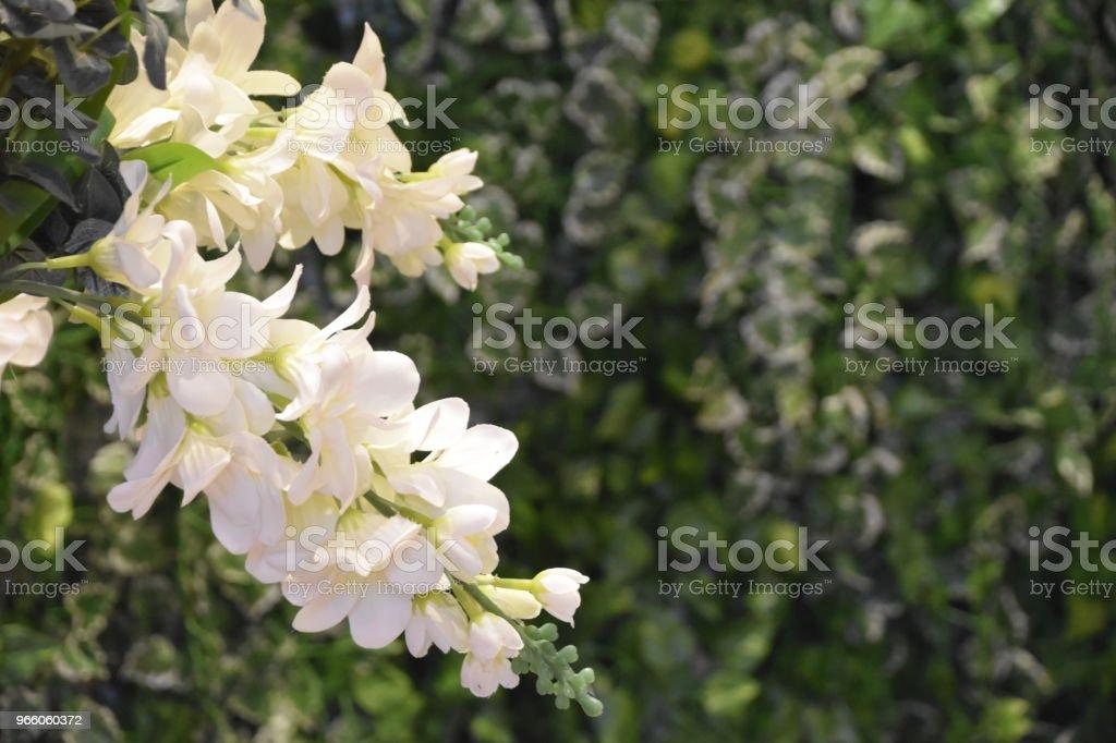 En buske med vita blommor - Royaltyfri Blomkorg - Blomdel Bildbanksbilder