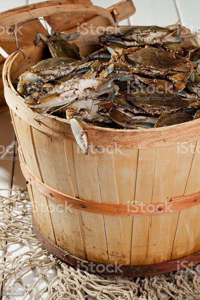 Bushel Basket of Blue Claws stock photo