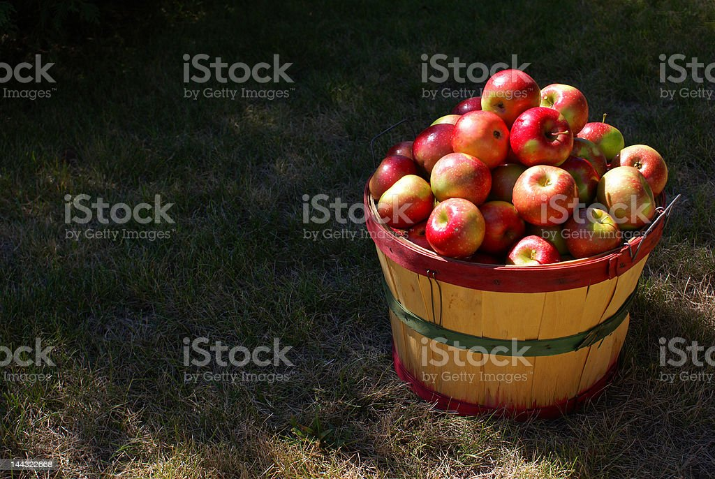 Bushel of Apples royalty-free stock photo