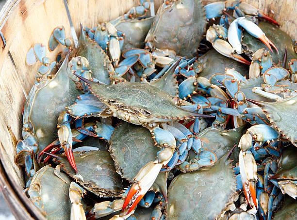 bushel of blue claw crabs - blauwe zwemkrab stockfoto's en -beelden