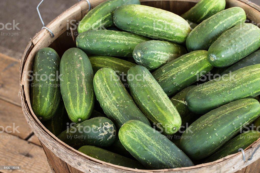 Bushel of Cucumbers At Farmers Market stock photo