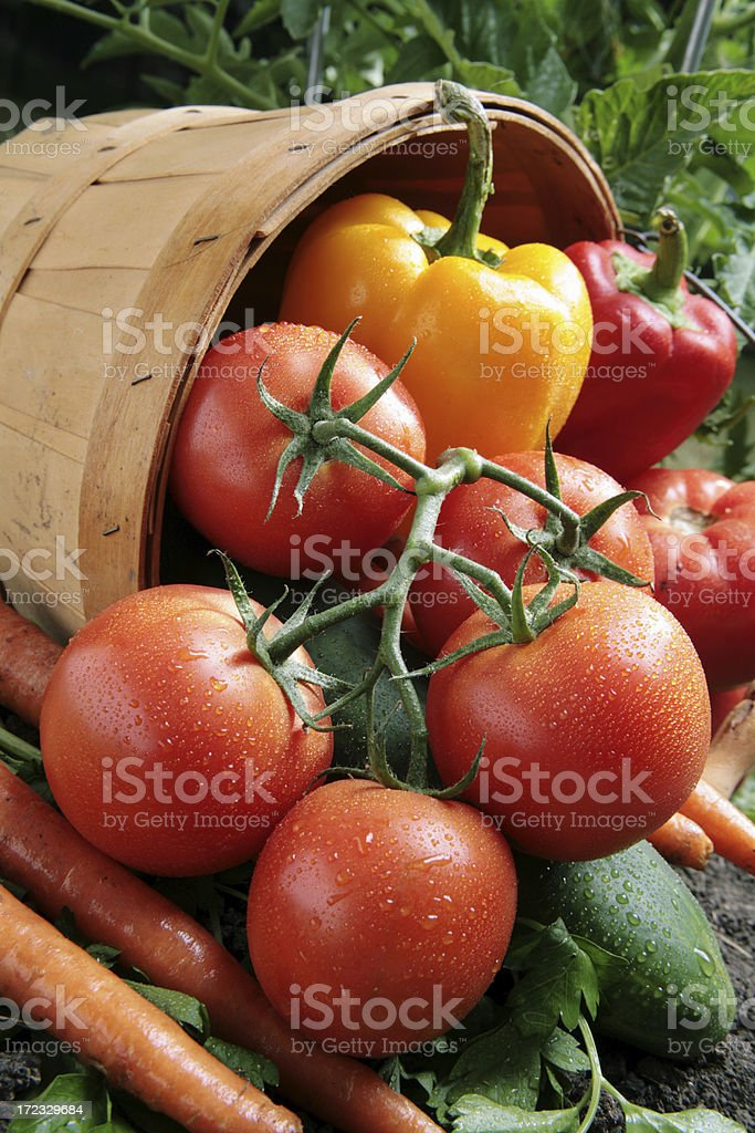 Bushel of Veggies stock photo
