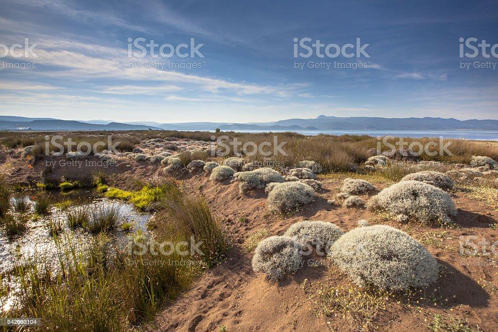 bushes Alykes wetlands sheepfields stock photo