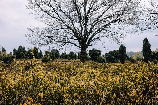 Bushes and trees in Luneburger Heide