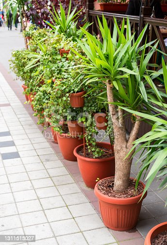bushes and trees in plastic pots for flowers on the street