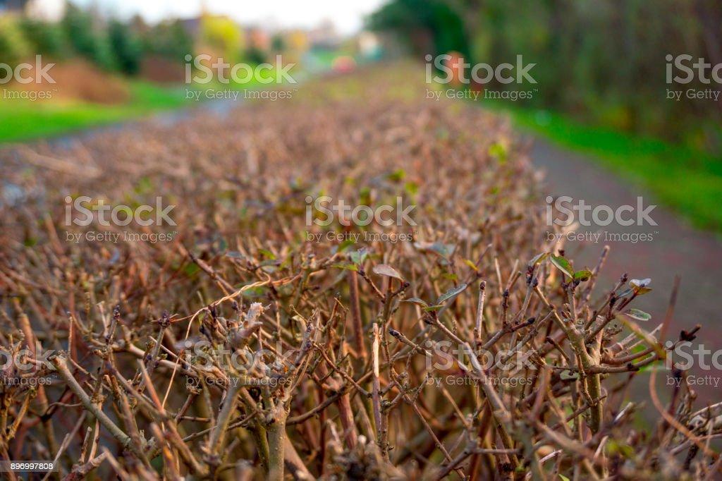 Bushes stock photo