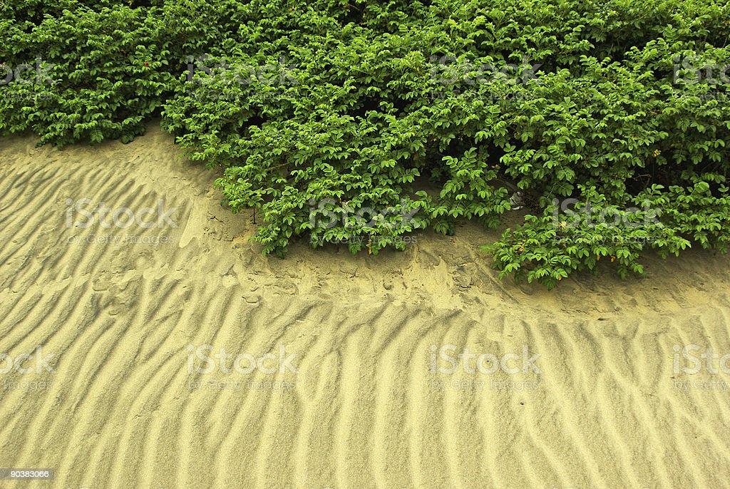 Bushes sand stock photo