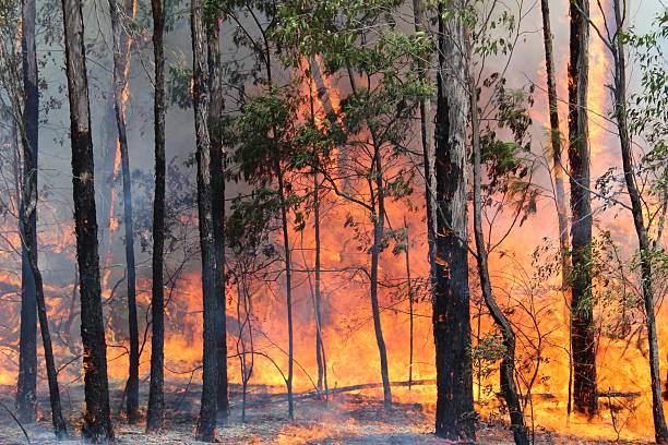 bushfire australia - bosbrand stockfoto's en -beelden